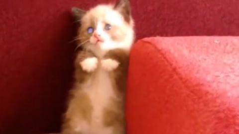 Dieses Kätzchen entdeckt eine merkwürdige Kreatur. Und macht sich fast in die Hose.