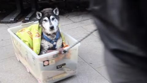 Dieser Mann macht etwas sehr bewegendes für seinen kranken Hund. Sie werden es nicht glauben.