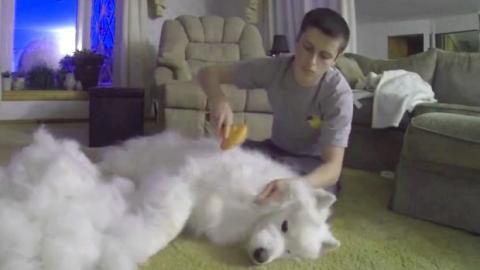 Dieser Mann hat seinen verwöhnten Samojeden eine Stunde lang gebürstet und hat enorm viel Fell aus dem Hund gekriegt.