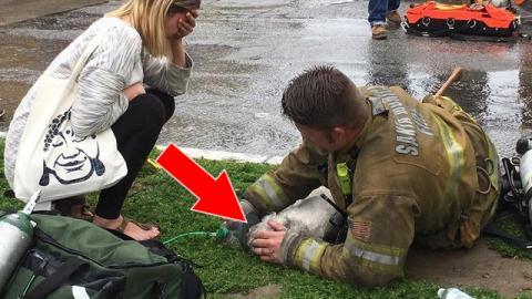 Ein Feuerwehrmann versucht alles, um einen kleinen Hund nach einem Brand wiederzubeleben