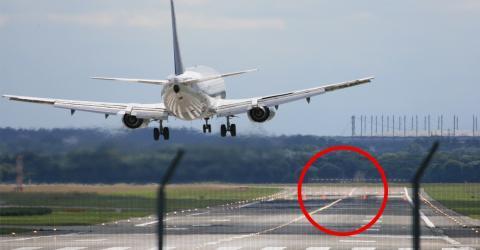 Ein hilfloses 200-Kilo-Tier auf der Landebahn, das die Piloten noch nie gesehen haben