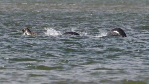 Ein neues Foto legt wirklich nahe, dass das Monster von Loch Ness lebt!