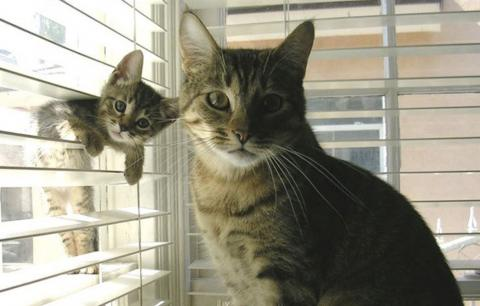 Verblüffend wie sehr diese niedlichen Kätzchen ihren Katzenmamas gleichen