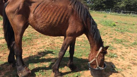 In letzter Minute: Tierschützer retten elf Pferde in jämmerlichem Zustand