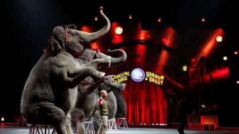 Straßburg verbietet Zirkus mit Wildtieren