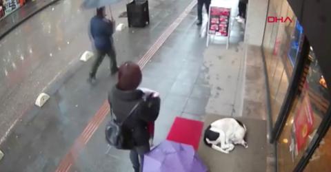 Alle lassen den Straßenhund links liegen: Dann bleibt eine Frau stehen
