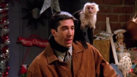 Friends: Was ist aus Marcel, dem süßen Kapuzineräffen von Ross geworden?