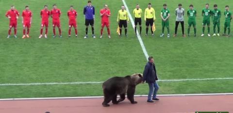 Bär eröffnet Fußballspiel in Russland und sorgt für scharfe Kritik