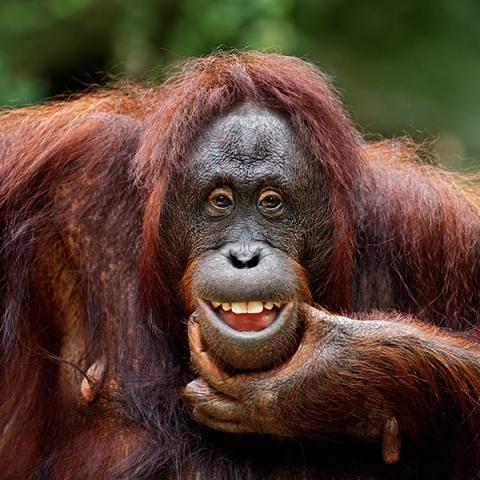 Bilder lachende tiere