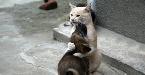 vertrauen einer katze gewinnen