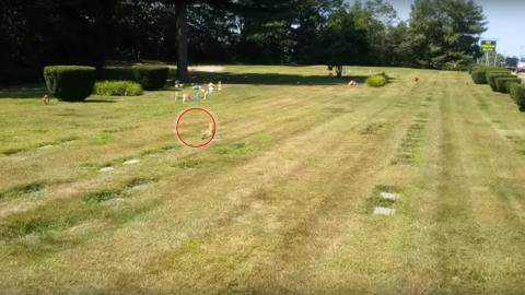Ein Radfahrer sieht den Geist eines Hundes auf einem Tierfriedhof! Erstaunlich, was passiert, als er sich nähert!