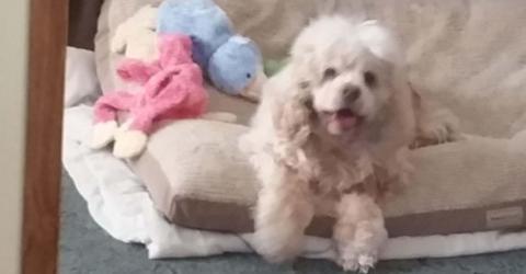 Sie lässt ihn einschläfern: Dann filmt sie, wie er mit anderen Hunden spielt