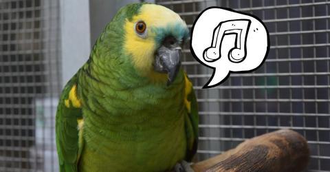 Video - Dieser singende Papagei macht momentan alle verrückt!