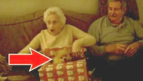 Diese Oma bekommt das schönste Weihnachtsgeschenk ihres Lebens! Ein herzbewegender Moment!