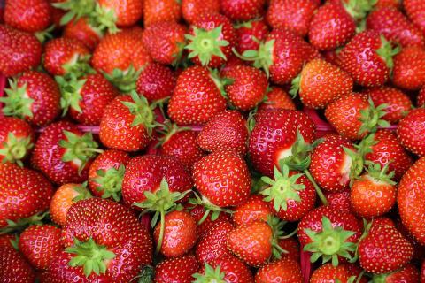 Wegen Gesundheitsgefahr: Deshalb solltet ihr keine Erdbeeren aus Spanien essen