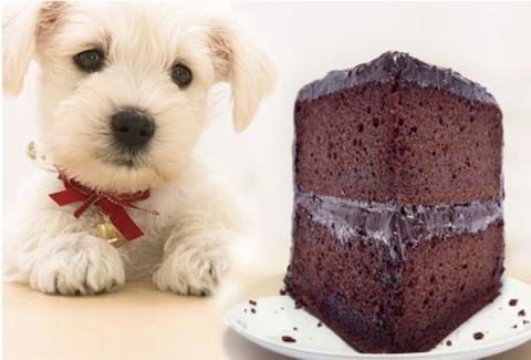 Das solltest du wissen: Lebensmittel, die für dein Haustier tödlich sind (Und es ist nicht nur Schokolade!)