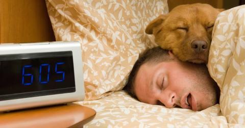 Schlafprobleme? So kann dein Hund dir zu einem gesunden Schlaf verhelfen