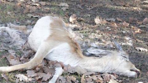 Jugendliche dringen in verlassenen Tierpark ein: Was sie dort finden, empört alle!