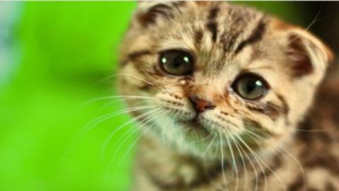 Daran erkennst Du, dass Deine Katze leidet