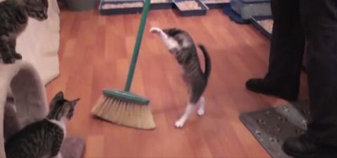 Den Boden zu fegen? Nicht mit diesen Kätzchen!