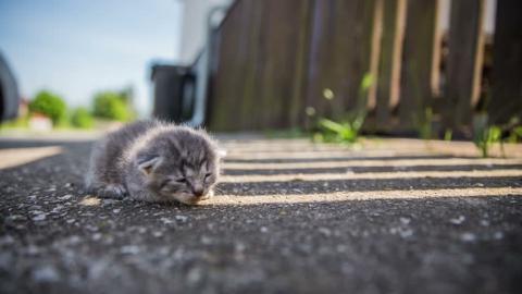 Hund und Katze: Erste Hilfe bei verwaisten Tierbabys