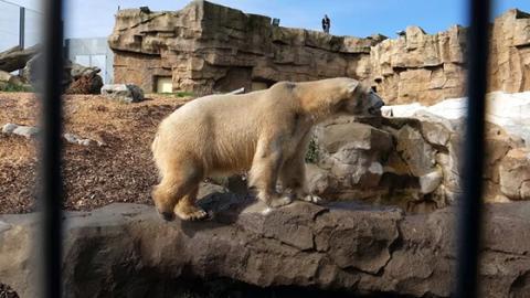 Bilder von einem Eisbär in Südfrankreich lassen niemanden kalt