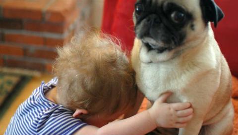 Video - Mögen es Hunde wirklich, wenn wir mit ihnen schmusen?