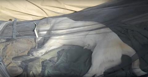 Ein amerikanischer Marinesoldat adoptiert einen Hund auf seiner Mission in Afghanistan