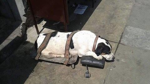Eine Frau findet einen ausgesetzten Hund auf ein Rollbrett gebunden