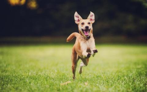 So erkennst du, ob dein Hund wirklich glücklich bei dir ist
