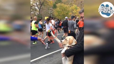 Video: Seht hier, wie herzallerliebst dieser Hund die Marathonläufer anspornt