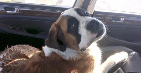 Dieser Hund musste aus Platzmangel ein Jahr lang in einem kleinen Käfig hausen