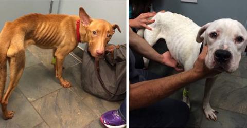 Zwei Polizisten finden zwei völlig verwahrloste und ausgehungerte Hunde in einem leerstehenden Gebäude