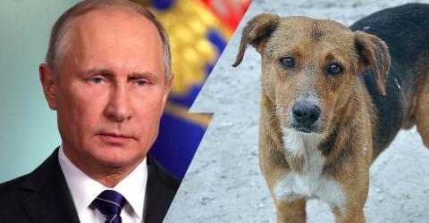 WM 2018: So grausam geht Putin jetzt gegen Tiere vor!