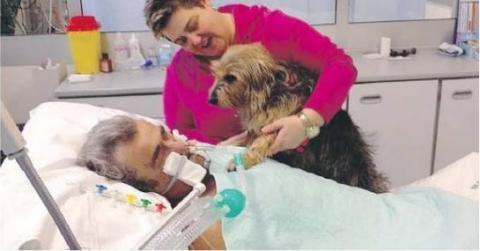 Komapatient reagiert auf die Anwesenheit seines geliebten Hundes