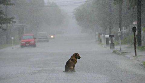Das Schicksal dieses Hundes bewegt die Amerikaner und macht sie wütend!