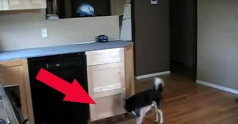 Hund baut eine Treppe
