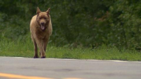 Dieser Hund akzeptierte nie, an der Leine zu sein und läuft jetzt jeden Tag über 6 km