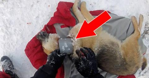 Rumänien: Ein Tierarzt rettet einen Hund, der mit dem Hals in einem Kunststoffrohr steckt