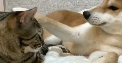 Der Hund kuschelt ganz friedlich mit der Katze, doch dann...