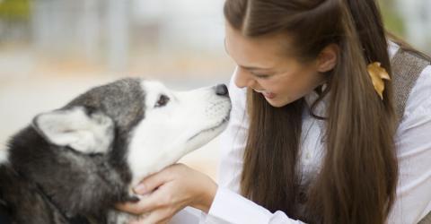 Hunde verstehen was wir sagen