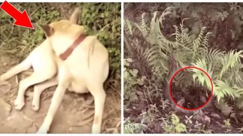 China: Ein Hund findet ein lebendig begrabenes Baby