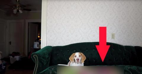 Hund mit Luftballons überrascht
