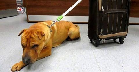 In Schottland wurde ein Hund mit einem Koffer am Bahnhof ausgesetzt