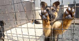 Der Tierschutzverein greift ein und nimmt der Tiere einer verwahrlosten Aufzucht an