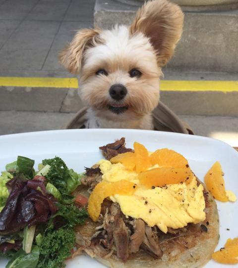 Der Hund Popeye wurde ausgehungert gefunden und darf dafür ...  Der Hund Popeye...