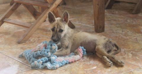 Er rettet einen angefahrenen Hund und bringt ihn ins Tierheim... Doch als er ihn ein paar Monate später besuchen kommt, ist er schockiert!