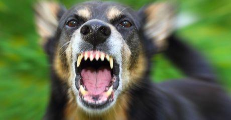 Mann belästigt Frau. Doch mit ihrem Hund hat er nicht gerechnet