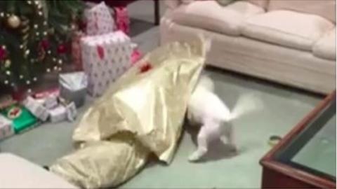 Dieser Hund wird total verrückt vor Freude, als er sein Geschenk auspacken darf!