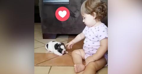 Die kleine Mia trifft zum ersten Mal ihren neuen Freund. Ihre Reaktion wird euch das Herz aufgehen lassen!